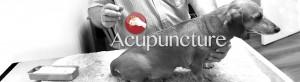 Dog Accupuncture