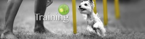 Dog Training Springfield